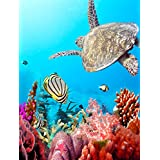 """TSlook Wall Art poster Print Canvas Prints Artwork Pictures Turtle Coral Fish Marine Animals 24""""x 36"""""""