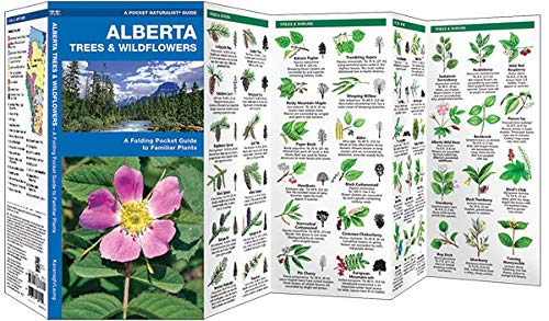 A Folding Pocket Guide to Familiar Plants Alberta Trees /& Wildflowers