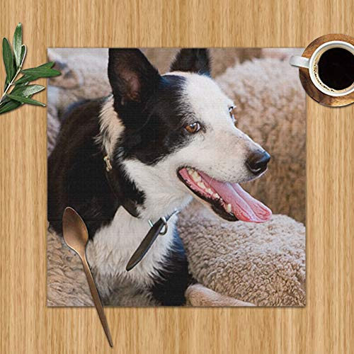 Sheep Dog Sitting On Back Wildlife Adorable Nature Colour Print Placemats,Placemats,Placemats Dining Table,Heat-Resistant Placemats, Stain Resistant Washable Pvc Table Mats,Kitchen Table Mats,Sets 6,1 (Back Australia Ideas Patio)
