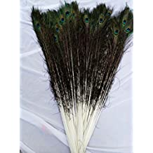 bargain house 50pcs Natural Peacock Tail Feathers (Big Eyed) about 26-30cm