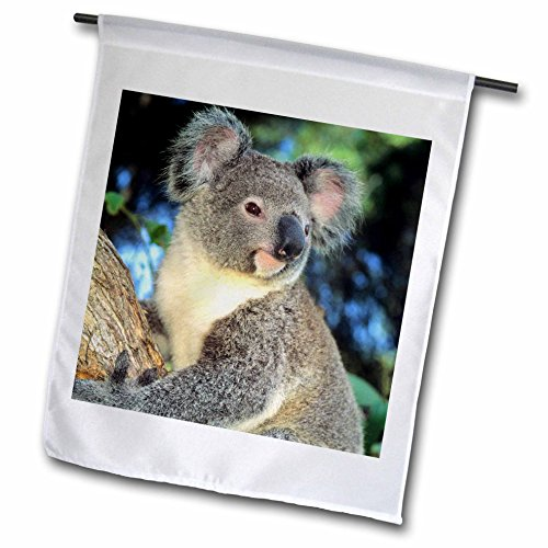 Koala Flag<br>12 x 18 Inches
