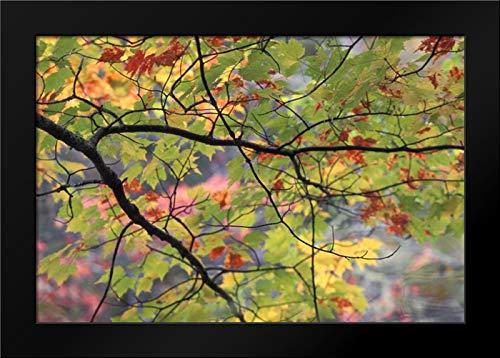 USA, Northeast, Branch of Fall Foliage Framed Art Print by Rotenberg, Nancy