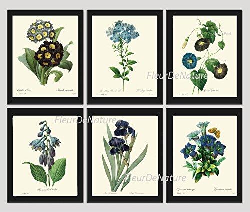 Botanical Set of 6 Prints Antique Beautiful Blue Flowers Wildflowers Iris Bluebell Home Room Decor Wall Art Unframed