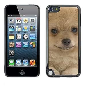 PC/Aluminum Funda Carcasa protectora para Apple iPod Touch 5 Pomeranian Dog Yellow Fur Canine Pet / JUSTGO PHONE PROTECTOR