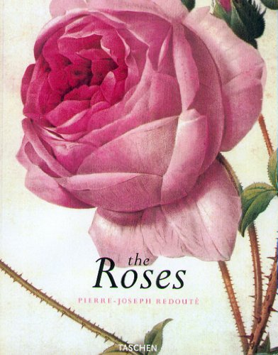 Redoute Roses - 2