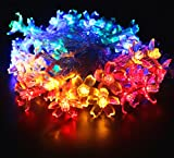 50 rice lights - Timewanderer 7.5m 50 Flower Led String Fairy Lights AA Battery Operated Lighting on Clear Wire for Indoor Outdoor Decoration (colorful)