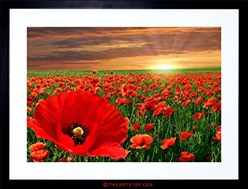 The Art Stop Photo Landscape Poppy Field Sun Rise RED Flower Beautiful Framed Print F97X4225