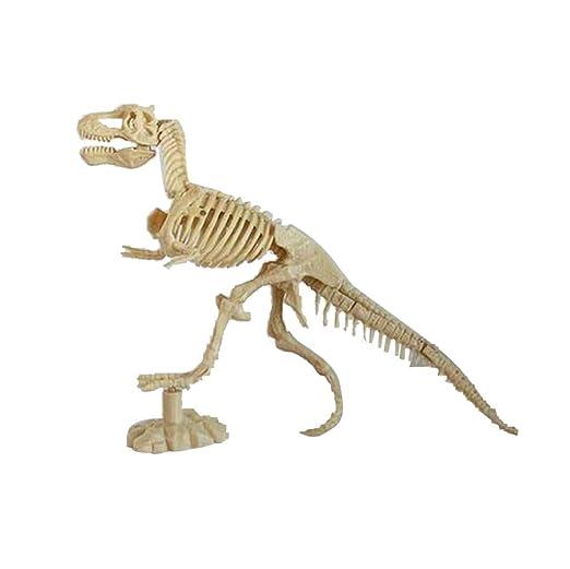 Dinosaurier-Fossilien