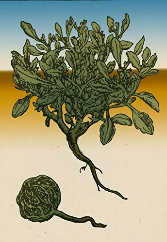 Anastatica Hierochuntica Resurrection Plant Poster Print by Science Source (18 x 24)