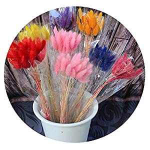 HuaHua-Store 60Pcs Long Dried Natural Flower Bouquets Colorful Lagurus Ovatus Uraria Picta Rabbit Tail Grass Bouquets Bunches Home Decoration 25