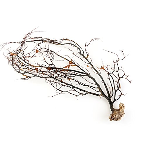 UEETEK Natural Black Coral Ornament Fish Tank for Aquarium Sea Fans Coral Decorations ()