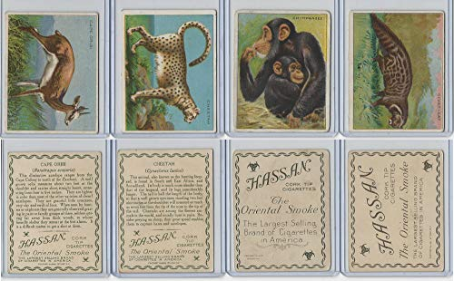 T29 Hassan, Animals, 1911, Cape Oribi, Cheetah, Chimpanzee, Civet Cat