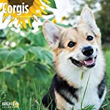 Welsh Corgi 2019 Wall Calendar