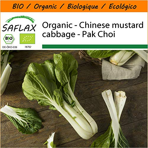 SAFLAX - Garden in The Bag - Organic - Chinese Mustard Cabbage - Pak Choi - 300 Seeds - with Cultivation Substrate in an Easy to Handle Stand up Bag. - Brassica rapa
