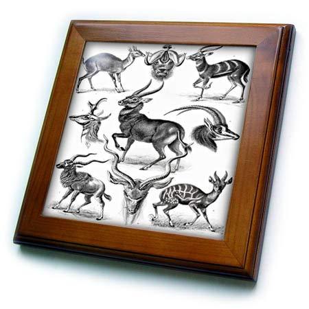 (3dRose Made in The Highlands - Art- Deer - Print of a Series of Deer - 8x8 Framed Tile (ft_307836_1))