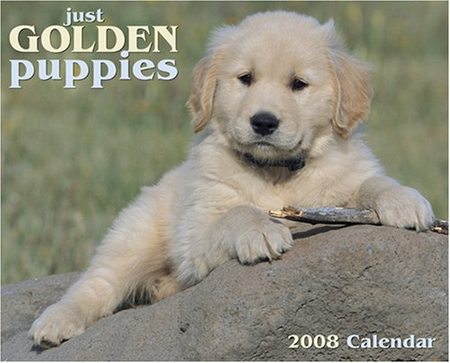 Just Golden Puppies 2008 Calendar (Just (Willow Creek))
