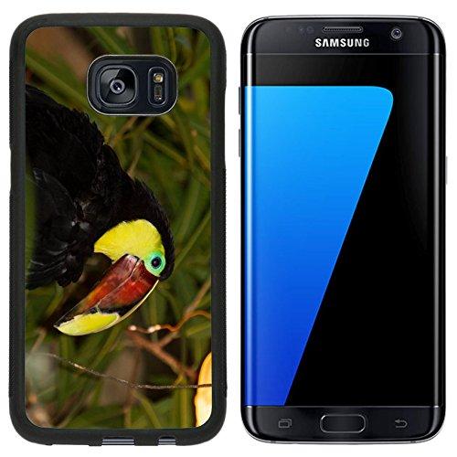 Liili Premium Samsung Galaxy S7 Edge Aluminum Snap Case The Chestnut mandibled Toucan or Swainson Toucan Ramphastos ambiguus swainsonii IMAGE ID (Chestnut Mandibled Toucan)