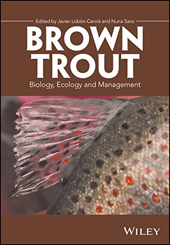 Fish Brown Trout - 3