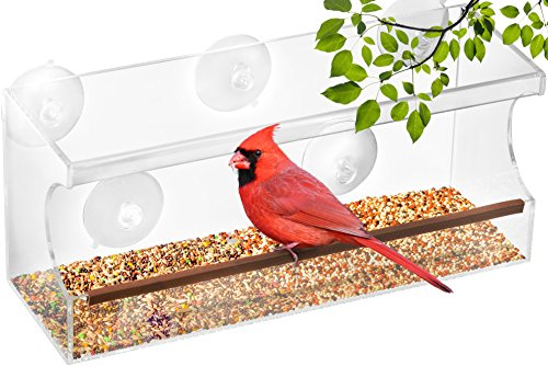 UPGRADED Large Squirrel Proof Bird Feeder House, 5 Suction Cup Replacement – Resistant Platform Buster – Tray for Peanut Seeds & Perch - Hangers for Wild Finch, Thistle, Hummingbird Window - Spectacles How To Clean