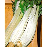 100 Cardoon Seeds, Avorio Large Smooth