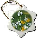 Ornaments to Paint Danita Delimont - Flower - Wildflower Close up -