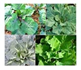 David's Garden Seeds Collection Set Collards Open Pollinated SL2877 (Multi) 4 Varieties 1100 Plus Seeds (Non-GMO, Open Pollinated, Heirloom, Organic)