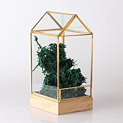 Gold Bamboo Base House Shape Open Glass Geometric Terrarium Container Wardian Case for Cactus Succulent Moss Fern (black)