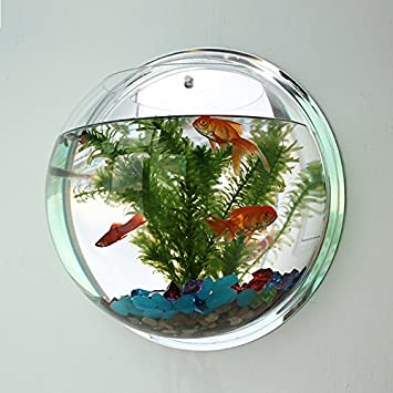 Acuario pecera colgante macetero adorno pared diseño decoracion interiores restaurantes 17 cm de OPEN BUY: Amazon.es: Hogar