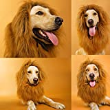 lcfun Lion Mane Costume for Dog - Pet Wig with Ears and Gift [Lion Tail], Dog Clothes for Halloween Party