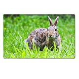 Large Table Mat Hungry Jack Rabbit Eating eating some grass in HDR IMAGE 20887697 by MSD Customized Large Tablemat Stain Resistance Collector Kit Kitchen Table Top Desk Drink