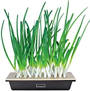 Hamama Home Green Onion Kit, Regrow Fresh Green Onions Indoors Every Week, 30-Second Setup, Just Add Water, Gr