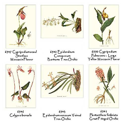 Vintage Native Orchid Note Cards - Botanical Print Collection ()
