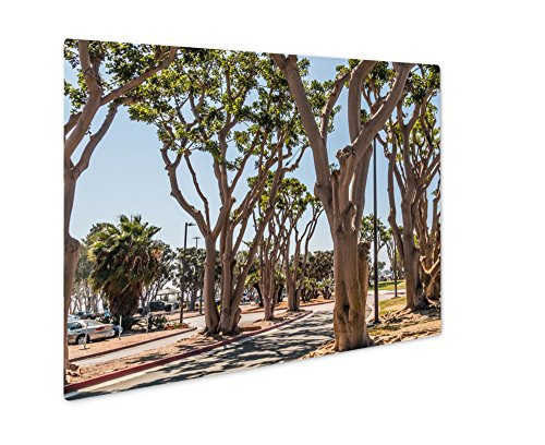 Ashley Giclee Metal Panel Print, Coral Trees Lining A Street At Embarcadero Park South In San Diego California, Wall Art Decor, Floating Frame, Ready to Hang 16x20, - Coral Springs Promenade The