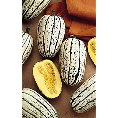 Squash Winter Bush Delicata Vegetable Seeds : Garden & Outdoor