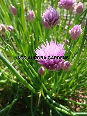 100 Chives Seeds