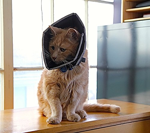 cat in a soft cone or e-collar