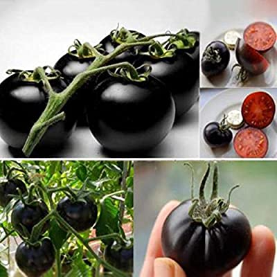 20PCS Rare Seeds Tomato Black Cherry Russian Heirloom Vegetable Seed Wholesale