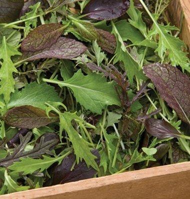David's Garden Seeds Greens Mix Elegance DGS653 (Green) 1000 Open Pollinated Seeds