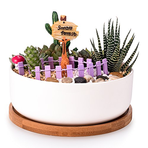 STAR-TOP 6 Inch Modern White Ceramic Round Succulent Cactus Planter Pot with Drainage Bamboo Tray,Decorative Garden Flower Holder Bowl(1 (Dish Garden Planter)