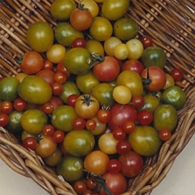 Tomato Garden Seeds - Rainbow Cherry - Non-GMO, Organic, Heirloom, Vegetable Gardening Seed