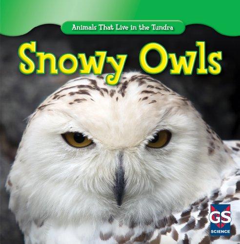 Snowy Owl Books For Children: Amazon.com - photo#41