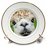 RinaPiro - Domestic Animals - Alpaca. Lama. South America. White. - 8 inch Porcelain Plate (cp_237102_1)
