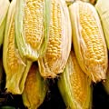 Sugar Buns Hybrid Sweet Yellow Corn, 75+ Premium Heirloom Seeds,Sweet & Yummy & Delicious! Fantastic Addition to Your Home Garden! (Isla's Garden Seeds), 90% Germination Rates, Highest Quality Seeds