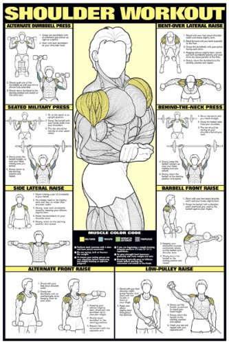 Shoulder Workout 24'' X 36'' Laminated by Fitnus Chart Series
