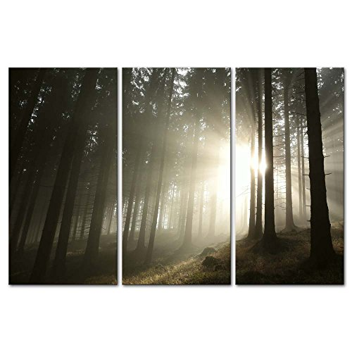 3 Pieces Modern Canvas Painting Wall Art The Picture For Home Decoration Sunrise In The Spring Beech Tree Wood Forest Landscape Print On Canvas Giclee Artwork For Wall Decor