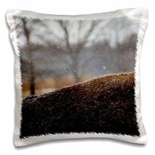 3dRose Danita Delimont - Bison - Illinois, Batavia. Back of American Bison in snow . - 16x16 inch Pillow Case (pc_250809_1) Batavia Bath