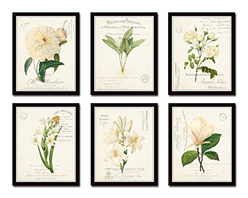 Art White Fine Antique Giclee (French Botanical Collage Print Set No. 4 Set of 6 Fine Art Giclee Prints - Unframed)