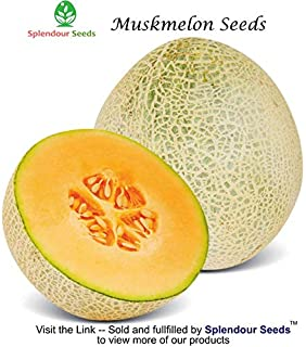 melon online dating