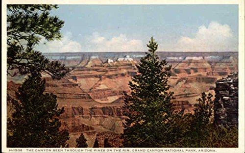 ugh the Pines on the Rim Grand Canyon National Park, Arizona Original Vintage Postcard (Pine Rim)