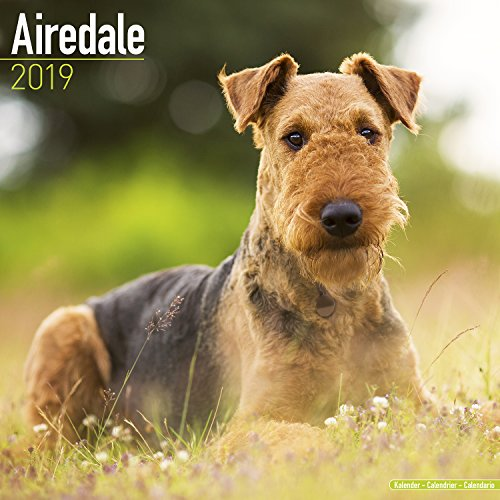 - Airedale Calendar - Dog Breed Calendars - 2018 - 2019 Wall Calendars - 16 Month by Avonside